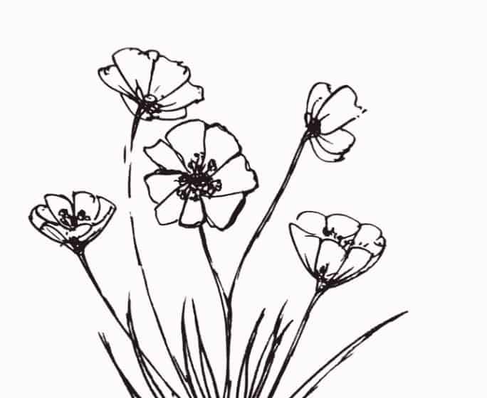 39 Gambar Sketsa Bunga Indah Sakura Mawar Melati Matahari