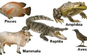 hewan bertulang belakang (vertebrata)