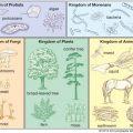 klasifikasi makhluk hidup kelas 7 smp