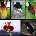 keanekaragaman spesies