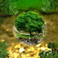 pengertian lingkungan menurut para ahli