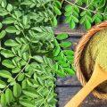 khasiat daun kelor bagi kesehatan tubuh